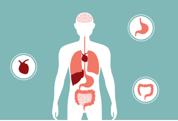 Digestive Health Solutions | Holistix Clinic